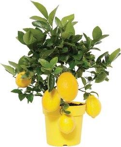 Комнатные растения раст-98