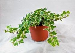 Комнатные растения раст-78