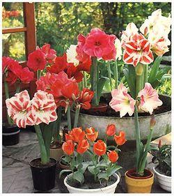 Комнатные растения раст-106