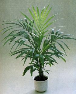 Комнатные растения раст-58