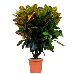 Комнатные растения раст-102