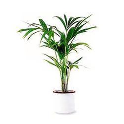 Комнатные растения раст-57