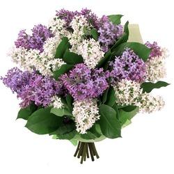закажи букет свежих цветов....и получи постоянную скидку -35% .....на все покупки.....( скидка бессрочна) New-38