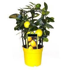 Комнатные растения раст-97