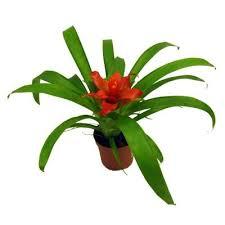 Комнатные растения раст-136