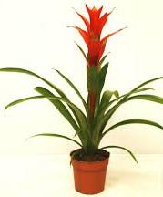 Комнатные растения раст-138