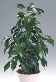 Комнатные растения раст-25