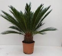 Комнатные растения раст-55