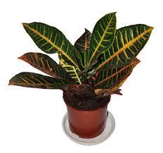 Комнатные растения раст-100