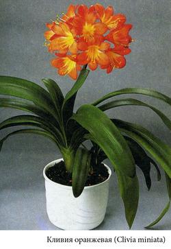 Комнатные растения раст-104