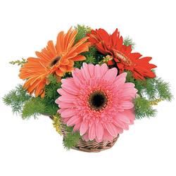 Цветочные корзины 25
