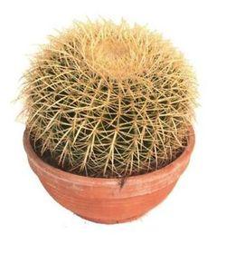 Комнатные растения раст-126