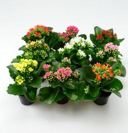 Комнатные растения раст-125