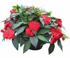 Комнатные растения раст-37