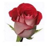 Розы 127