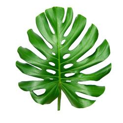 Зелень 151