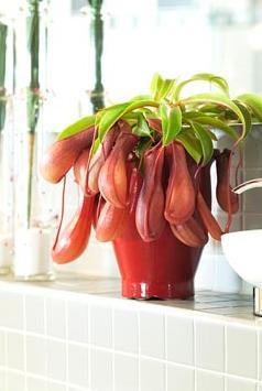 Комнатные растения раст-93