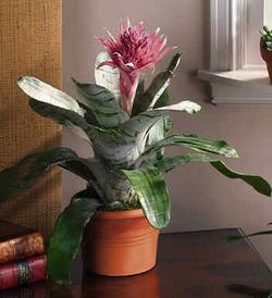 Комнатные растения раст-75