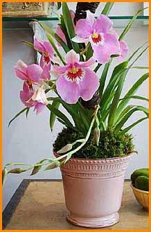 Комнатные растения раст-9