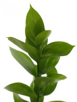 Зелень 150