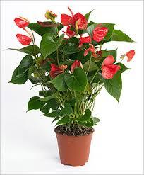 Комнатные растения раст-120