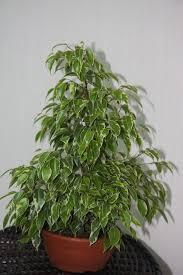Комнатные растения раст-17