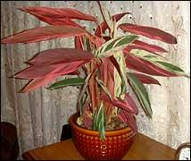 Комнатные растения раст-142