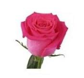 Розы 126