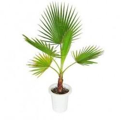 Комнатные растения раст-84